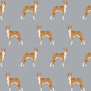 basenji standing pure breed dog fabric grey