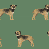 border terrier standing dog breed fabric green