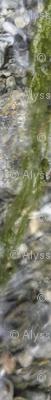 Alyssa Williams_ green moss_45ac