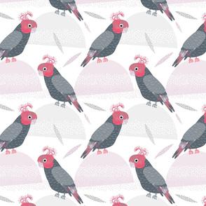 Gang Gang Cockatoos by Mount Vic and Me