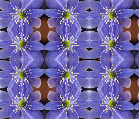 Symmagery Lavender Hepatica fabric by tara_symmagery on Spoonflower - custom fabric