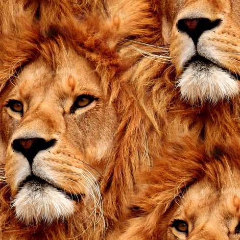 Mr. Lion fabric by versodile on Spoonflower - custom fabric