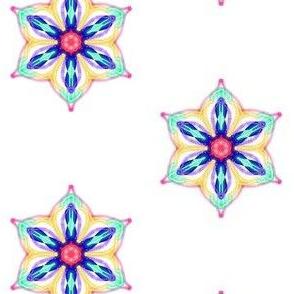 Gypsy Stars Flowering on White