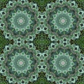 Green Succulent Pinwheels 1431