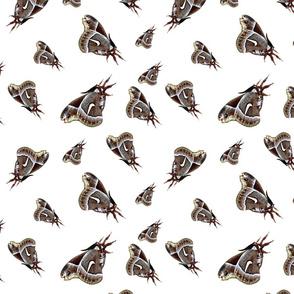 Moth - White