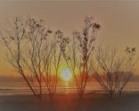 Rrrbare-cassurinas-at-sunset_thumb