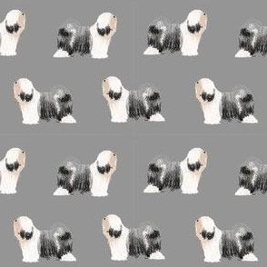 tibetan terrier dog breed fabric standing grey