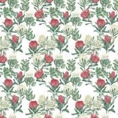 protea-white