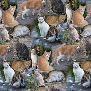 Mostly Marmalade Cats Montage