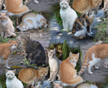 Rmostly-marmalade-cats-montage_thumb