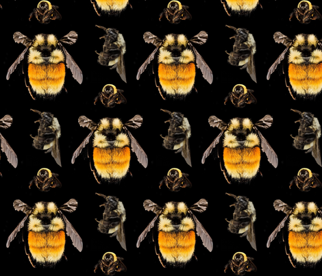 save the bees fabric by live&cre8 on Spoonflower - custom fabric