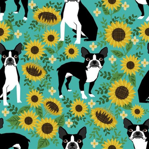 boston terrier sunflower fabric dogs and sunflowers floral design - turquoise - LARGE