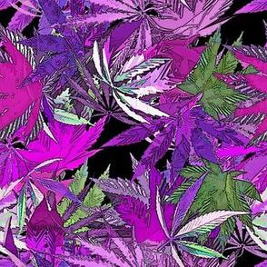 Cannabis Fushia Joy