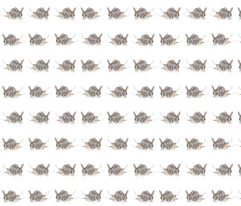 3881315A-E25B-4B6D-89BF-1253A84F87B5 fabric by centralaustralian_wildflowerart on Spoonflower - custom fabric
