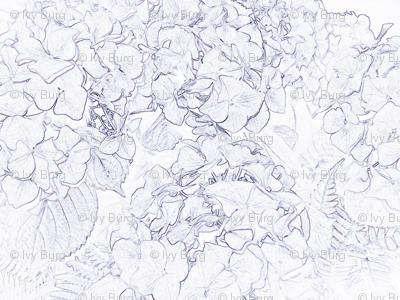 sketched hydrangeas