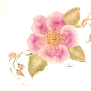 Wild Roses In Bloom