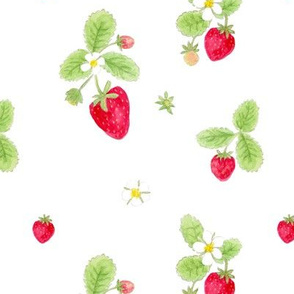 strawberries on white/ childrens room baby nursery kids