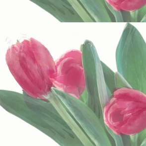 birthday tulipswc