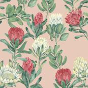 protea-blush