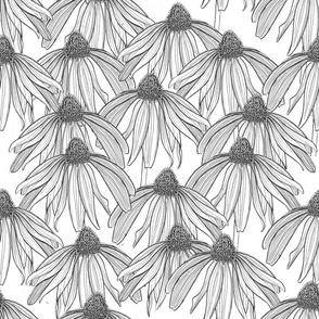 coneflower white