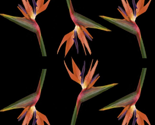 Birdofparadise-brushes-yemplate-2-copy_ed_thumb