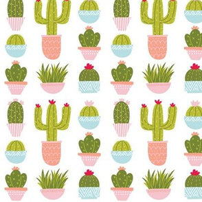Potted Plants & Cactus - White