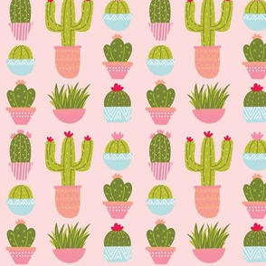 Potted Plants & Cactus - Pink