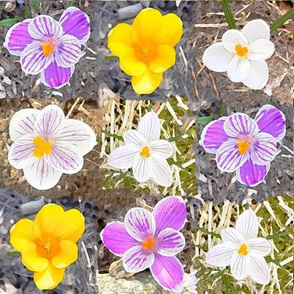 Watercolor Crocuses