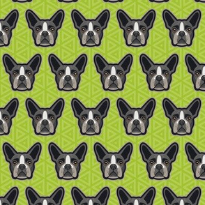 Boston Terrier Chartreuse Green Small