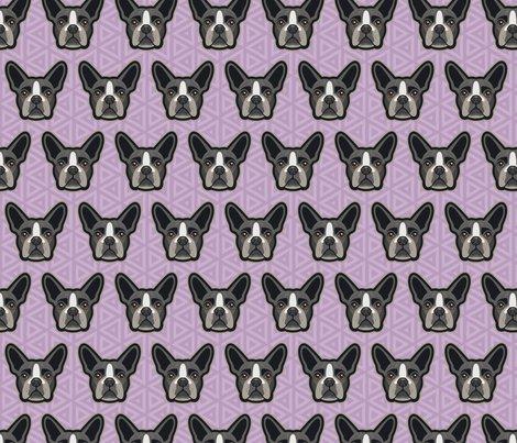 Boston_terrier_lilac-49_shop_preview
