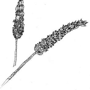 Lavender stippling-BW