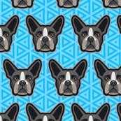 Boston_terrier_bblue-60_shop_thumb