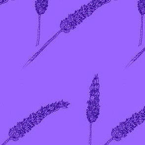Lavender stippling-Lavender