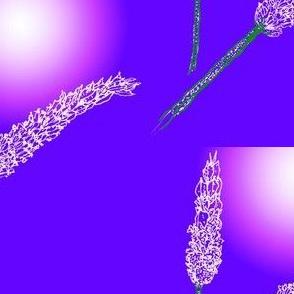 Lavender stippling-PurpleWhite SunBloom