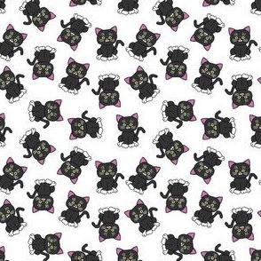 Gray kittens abound