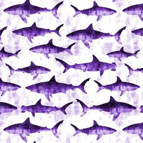 sharks - purple