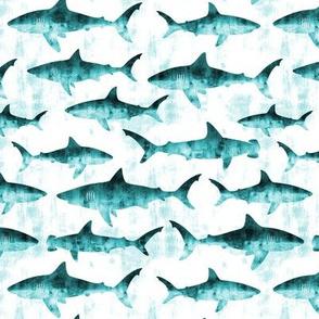 sharks - teal