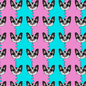 Black beauty sugar glider on blue and pink background