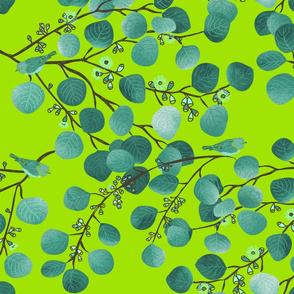 EUCALYPTUS Spring Leaf