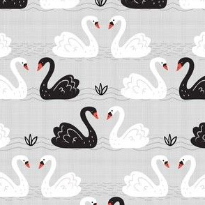 Black + White Swans on Gray