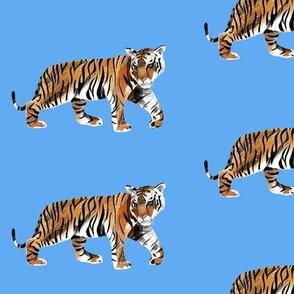 Tiger Walk on Blue