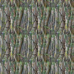 mangrovepattern
