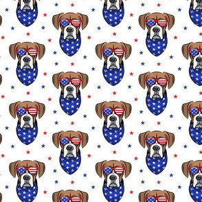 (small scale) patriotic boxer on white with stars