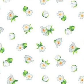 Strawberry Blossoms on White