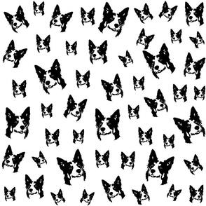 Border Collie black white fabric