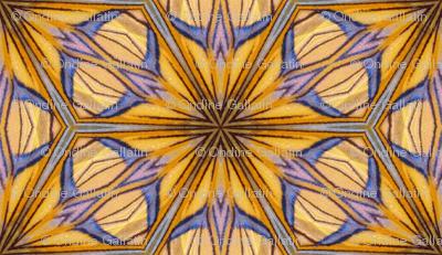 Moth wing dreams
