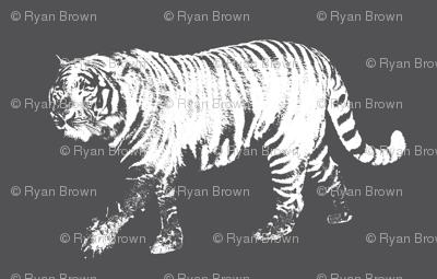 Tiger Prowl on Charcoal // Medium