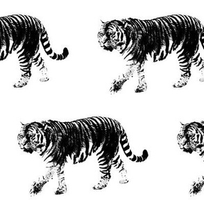 Tiger Prowl // Large