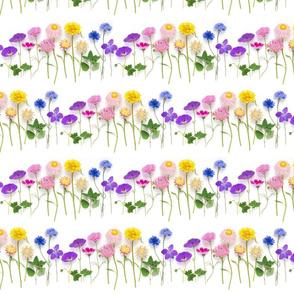 Rainbow of summer flowers stripe