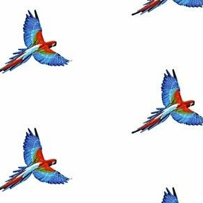 Parrot- Small Scale